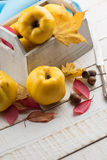 Fresh quinces. In box on white table. Selective focus. Rustic style Royalty Free Stock Images