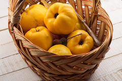 Fresh quinces. In bucket on white table. Selective focus. Rustic style Royalty Free Stock Photos