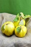 Fresh quinces Stock Photo