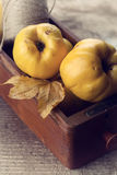 Fresh quinces and twine. Autumn postcard. Fresh quinces and twine  in box on table. Selective focus. Rustic style. Autumnal postcard/background Royalty Free Stock Photo