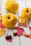 Fresh quinces. On white table. Selective focus. Rustic style Royalty Free Stock Photo