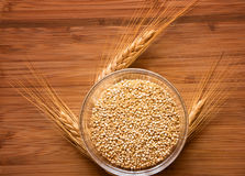 Fresh Quinoa with Wheat. Bowl of fresh quinoa on a wooden background with some wheat stalks Royalty Free Stock Images