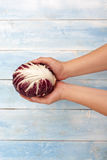 Fresh Radicchio in hands with blue wooden table in background. Radicchio in hands with blue wooden table in background, top view Royalty Free Stock Photos