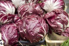Fresh Radicchio Lettuce. On Farmers Market in Italy Stock Image