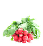 Fresh radish Royalty Free Stock Images