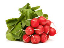Fresh radish Stock Photography