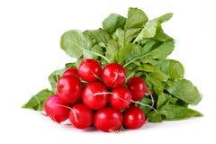 Fresh radish. Stock Images