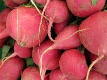Fresh radish Royalty Free Stock Image