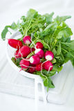 Fresh radish. Fresh and tasty radish in colander Stock Image
