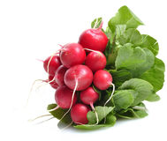 Fresh Radish. On A White Background Royalty Free Stock Images