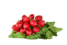 Fresh radish. On white background Stock Photography