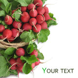 Fresh radish. Bunches of fresh radish on a white background Royalty Free Stock Photo