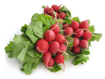 Fresh radish. Bunches of fresh radish on a white background Stock Photos