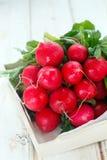 Fresh radish. With green tops Royalty Free Stock Image
