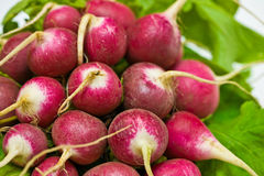 Fresh radish. A background of the closeup view of fresh radish Royalty Free Stock Photos