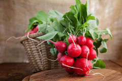 Fresh radish. Vegetable background. Fresh radish on wood Royalty Free Stock Photography