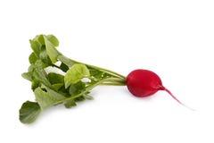 Fresh radish. With foliage, isolated on white Stock Photo