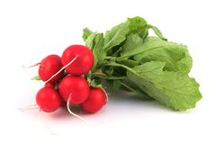 Fresh Radish Royalty Free Stock Photography
