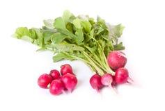 Fresh radish across white Stock Photography
