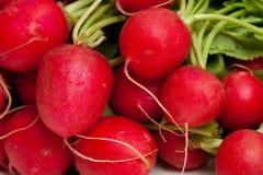 Fresh radish background. Fresh background of red radish with leafs Stock Image