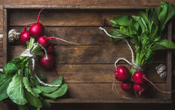Fresh radish banches on wooden tray background, copy space Royalty Free Stock Images