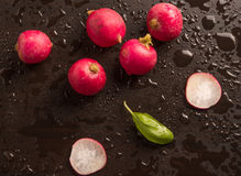 Fresh radish with basil leaf. In a wet background Royalty Free Stock Images