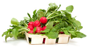 Fresh radish in basket Stock Photography