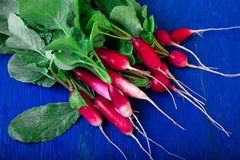 Fresh radish on blue background. Top view. Bunch of small radishes. Fresh radish on blue background. Top view. Bunch of small radishes Royalty Free Stock Photo