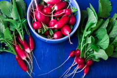 Fresh radish in blue bowl. Top view. Bunch of small radishes. Fresh radish in blue bowl. Top view. Bunch of small radishes Royalty Free Stock Photos