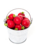 Fresh radish. In a bucket isolated on white background Stock Image