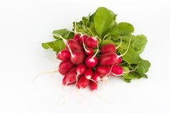 Fresh radish bunch Royalty Free Stock Photography