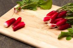 Fresh radish. A bunch of freshly picked homegrown radish Stock Photography