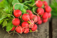 Fresh radish bunch. And other spring vegetables Stock Image