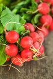 Fresh radish bunch Stock Images