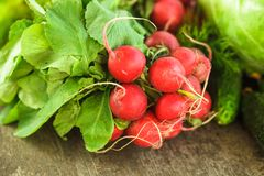 Fresh radish bunch. And other spring vegetables Royalty Free Stock Photography