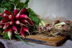 Fresh radish. Bunch of fresh radish on rustic wooden background Stock Photography