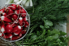 Fresh radish and bunches of greenery. Close-up Stock Photo