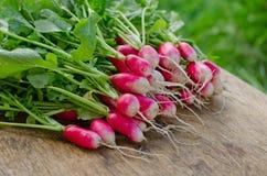Fresh radish. Bundle of freshly picked crisp radish lying on a wooden table Royalty Free Stock Photo
