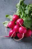 Fresh radish bundle Stock Images