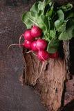 Fresh radish bundle Royalty Free Stock Photography