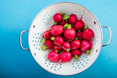 Fresh radish in colander on blue board. Top view Stock Image