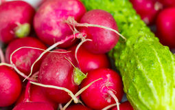 Fresh Radish and cucumber. Closeup with a small depth of field Stock Photo