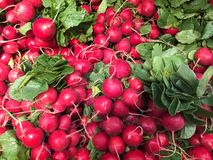Fresh Radish. On display at a supermarket Stock Photo