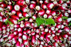 Fresh radish at farmers market. Close up photo Royalty Free Stock Images