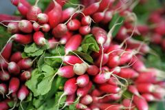 Fresh radish at farmers market. Close up photo Royalty Free Stock Image