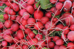 Fresh radish and foliage. Image of background fresh radish and foliage Stock Images