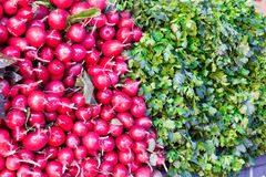 Fresh radish and foliage. Photo of background fresh radish and foliage Stock Photo