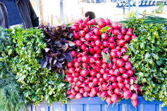 Fresh radish and foliage. Photo of background fresh radish and foliage Stock Image