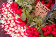 Fresh radish. For sale at a market Stock Image