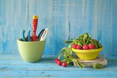 Fresh radish, gardening tools. Fresh radish from the kitchen garden, with gardening tools, free copy space Stock Image